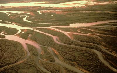 Britain's Mesolithic landscape