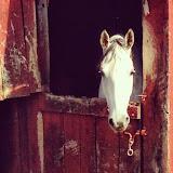 Equine Impressions