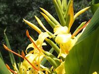 品種の保存には、地下茎が混雑しないように鉢ごと土に埋める。