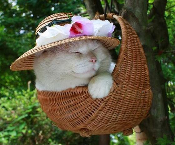 imagens de um gato muito cute