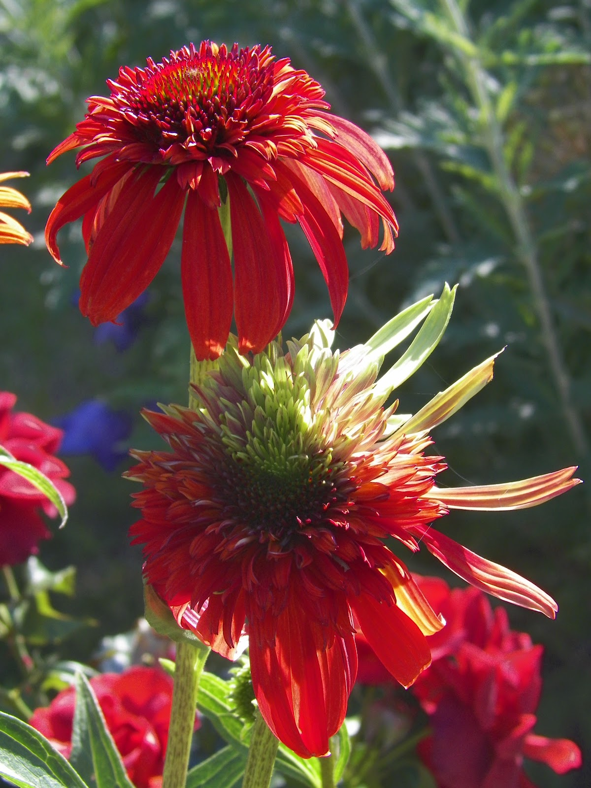 I Love My Garden: The Heat is On: Hot Colors in the Garden