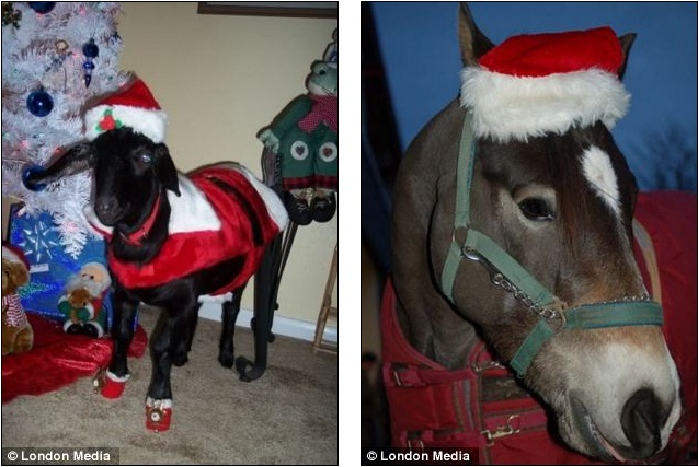Fur ward these dogs have gone to town with their christmas outfits