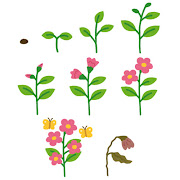 花の成長過程のイラスト