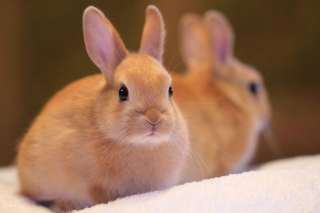 Eco Glamazine Bunny Brushes Cruelty Tools