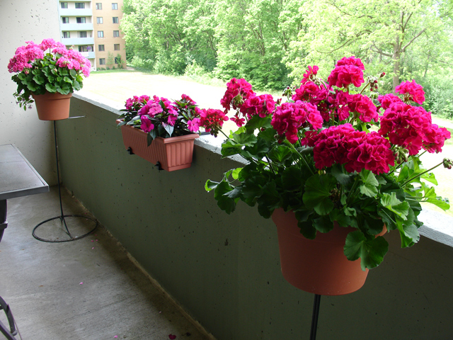28+ flowers balcony flowered windows amp balconies finestre .