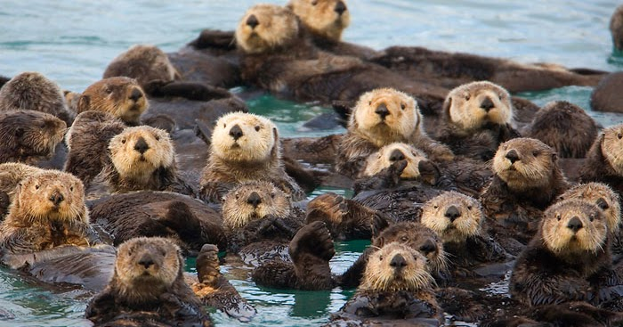 Otterly Practical