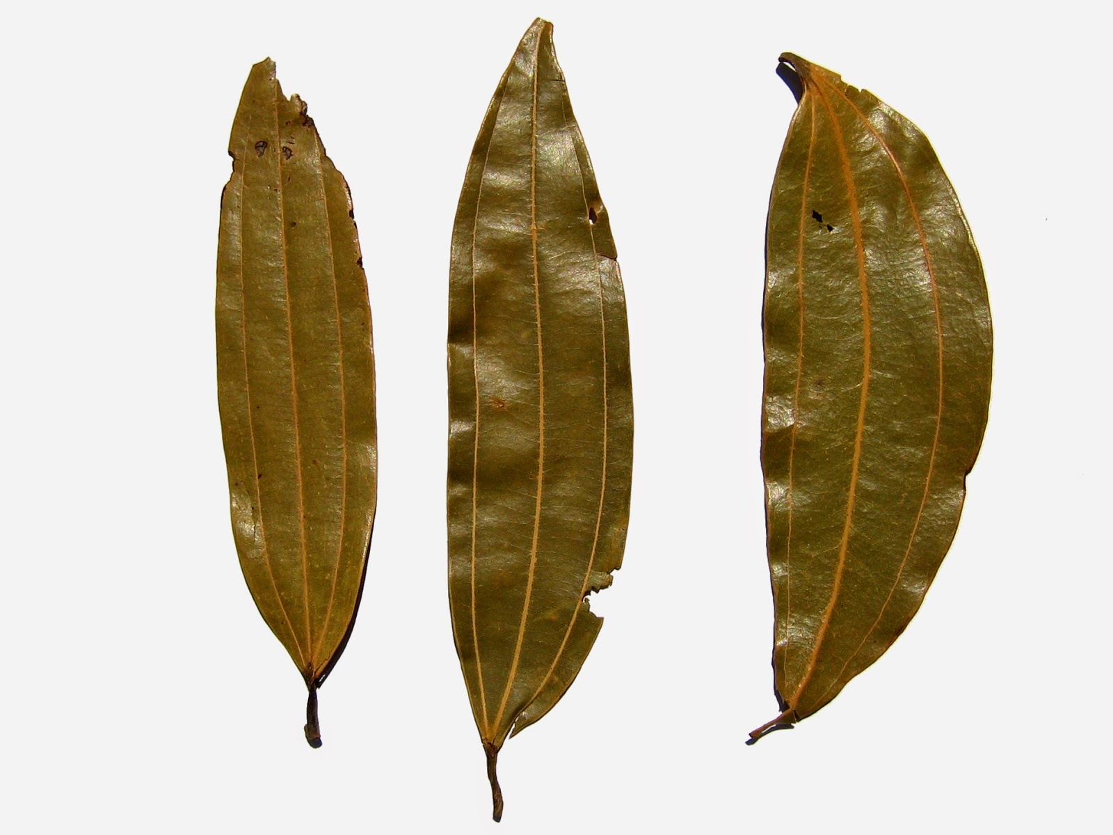 Benefits of Bay Leaf