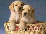 perros sin hogar que te necesitan