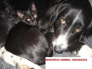DENÚCIAR MAUS TRATOS A ANIMAIS! 808200252