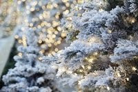 Weihnachten bei Center Parcs