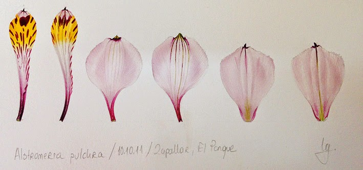 Taller de ilustración botánica. Isik Güner.