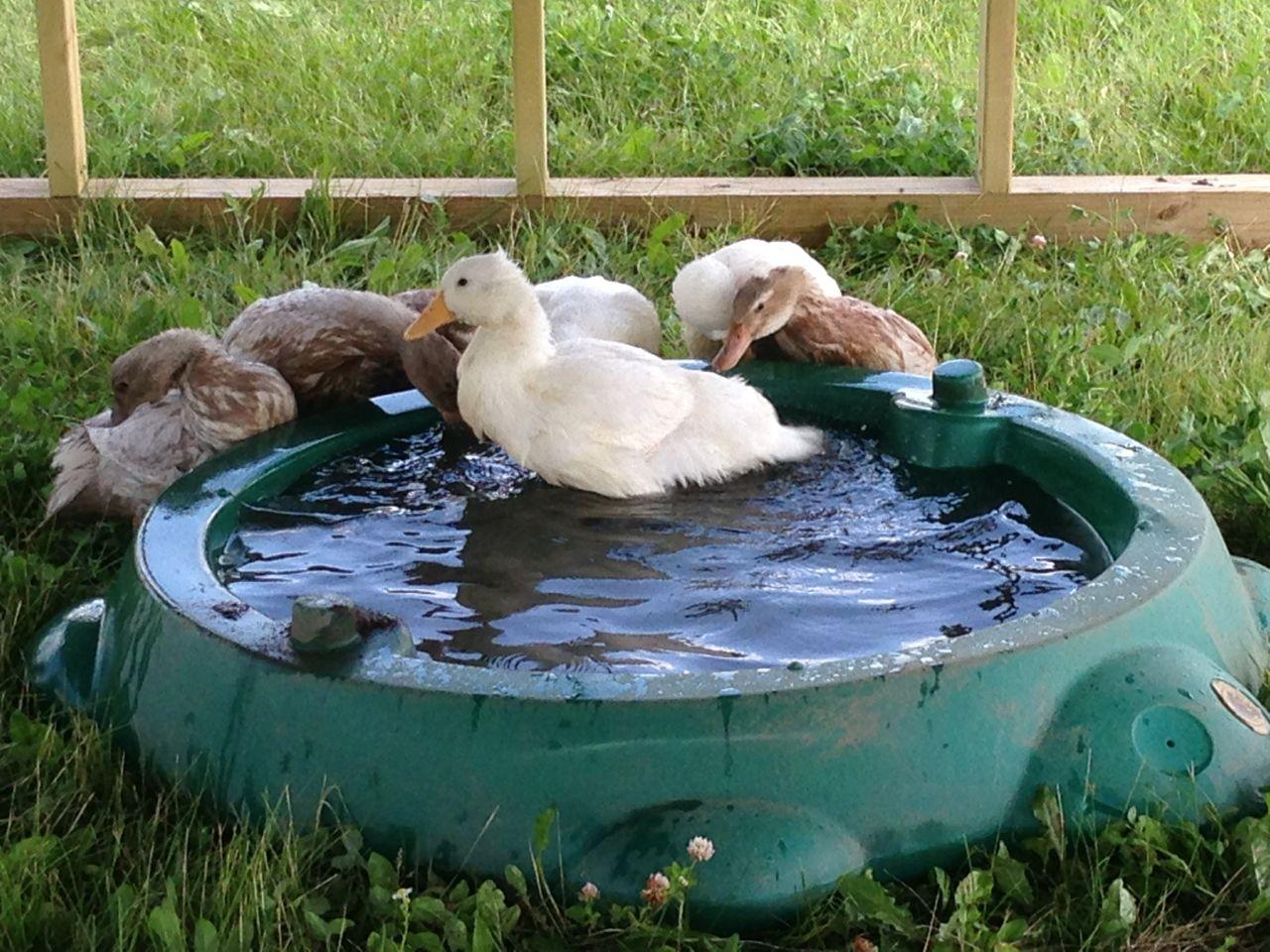 first duck Teens