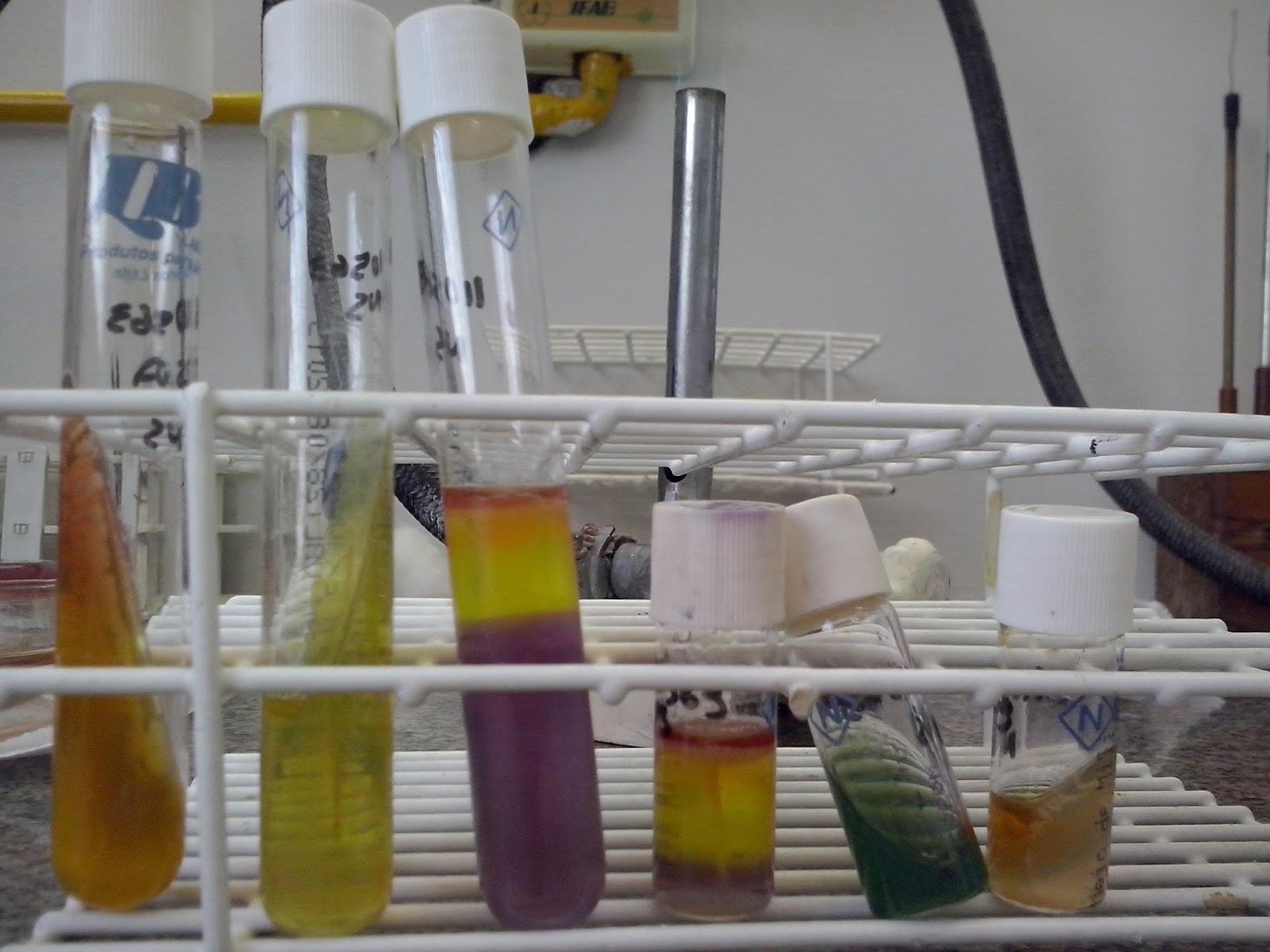 Klebsiella pneumoniae on cled agar