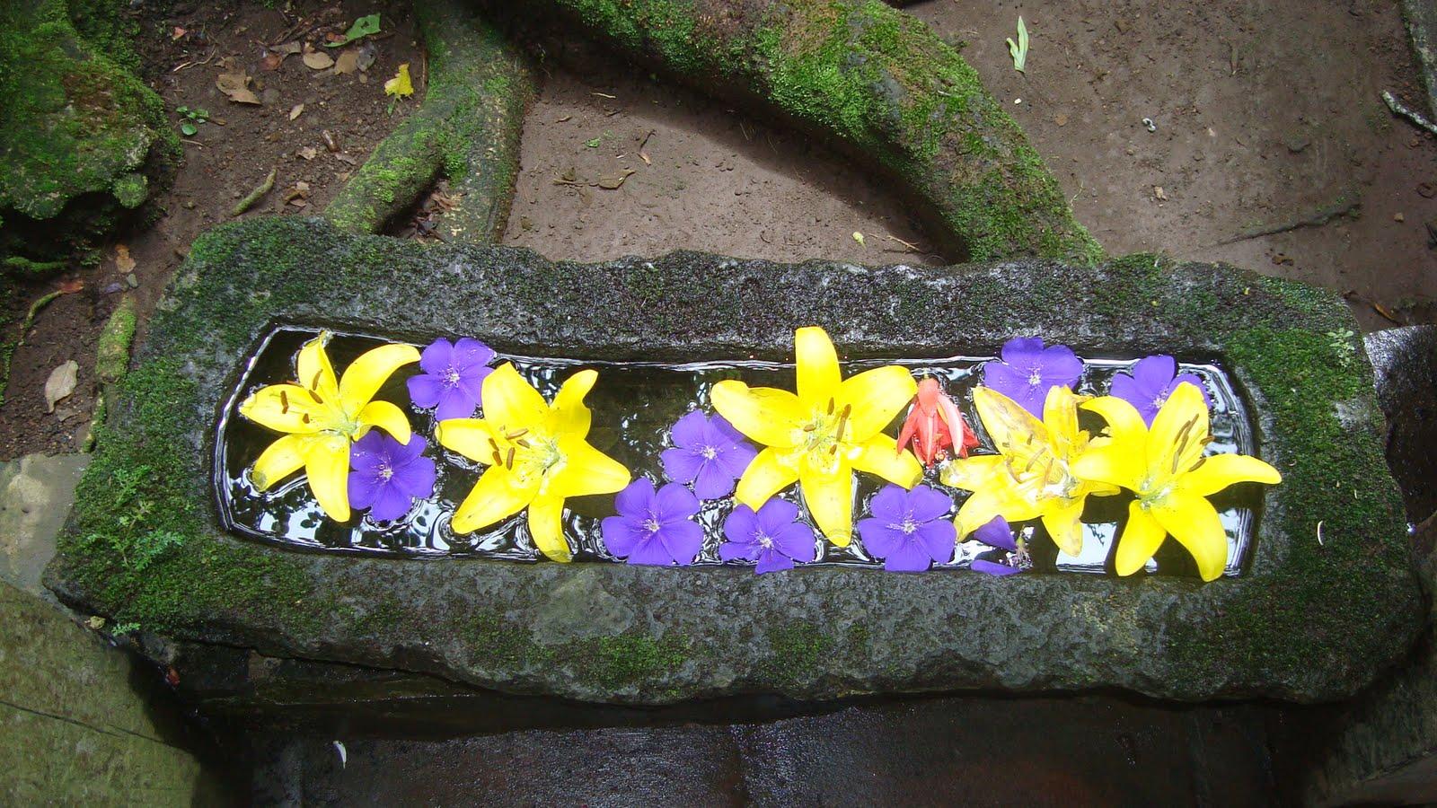 Aventura en El Salvador: Ruta de las flores