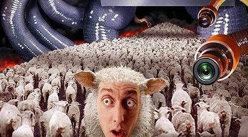 Individus sous influences : Une société de moutons Moutons