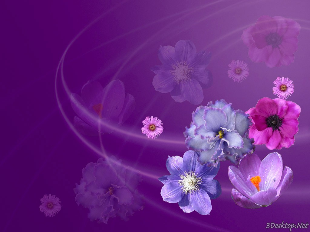 download wallpapers of flowers