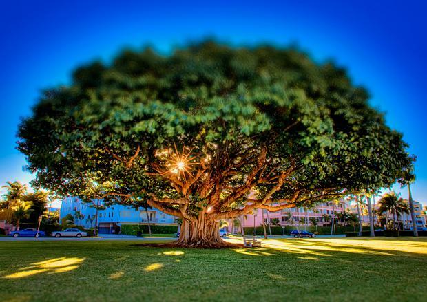 Mempelajari Proses Biokimia yang terjadi di dalam pohon, mengetahui bagaimana pohon itu tumbuh