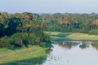 The-Amazon