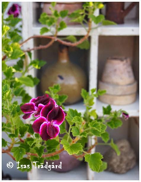 Prylhylla i växthuset !