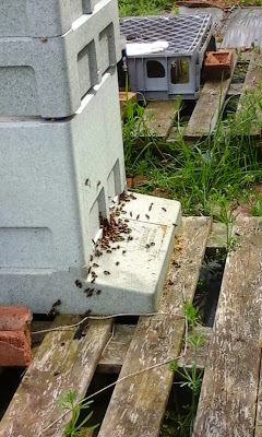 Bee hive, busy entrance, pollen, nectar