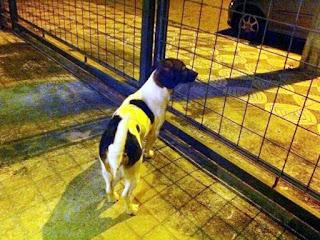 Cadela foi resgatada e levada para um lar temporário (Foto: Bruna Assaf/Arquivo Pessoal)