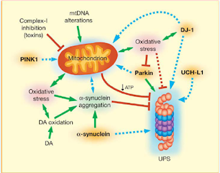 Pathophysiology of Parkinson's Disease Skema