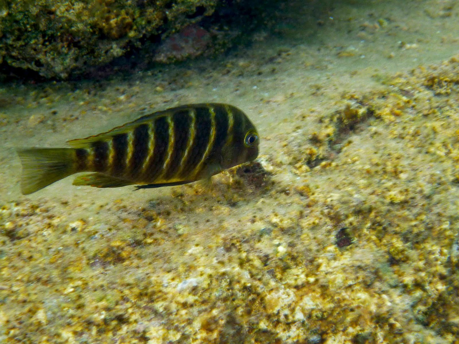 Lake tanganyika tanzania a post from the p i yvonne for Fish that eat algae