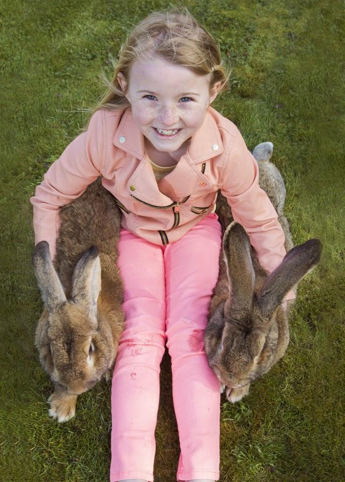 worlds biggest rabbit darius jeff-4
