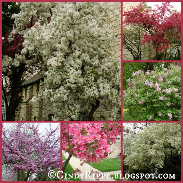 crabapple trees, lilac, redbud tree, spring tree blossoms, photography, Florals-Family-Faith, Cindy Rippe