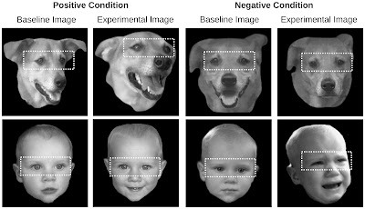 Photos of the faces of dogs and babies used in the experiment