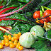 Gemüsegartenernte & Ein Mangoldeintopf zum Abschluss meines veganen Monats