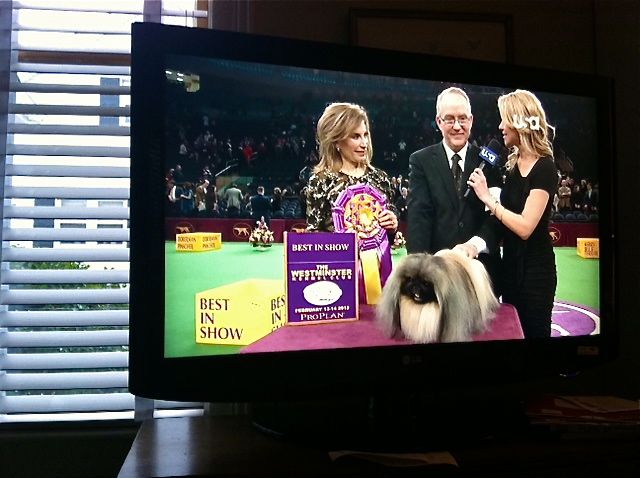Malachy-Best-in-Westminster-Dog-Show
