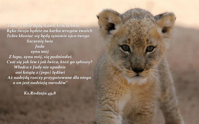 http://www.dailybackgrounds.com/wp-content/uploads/2014/12/cute-lion-cub.jpg