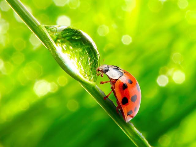 Ladybug on Leaf Green Blurred Lights Macro HD Wallpaper