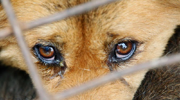 kszz.com , Trend Story: Animals will shed tears, but is it ...