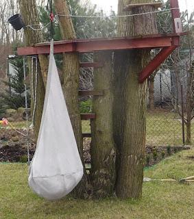 platforma na drzewie