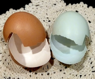 Americana Hen Eggs