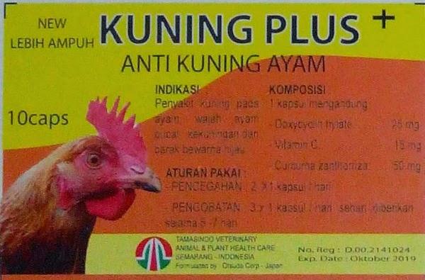 anti penyakit kuning, ayam laga kuningan, obat lever