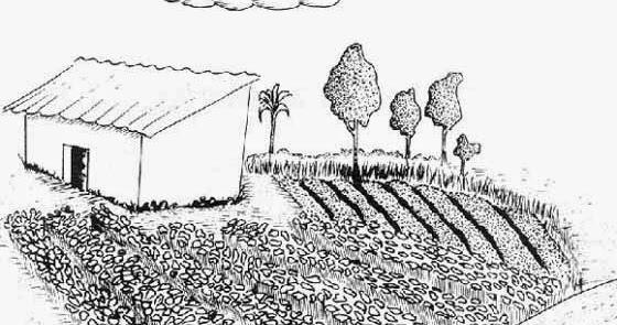 Que son los cultivos de cobertura libros del agro for Que son cultivos asociados