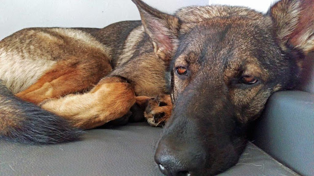 Chillen mit Chili Entspannung Entschleunigung Hund Schäferhund Atemtechnik
