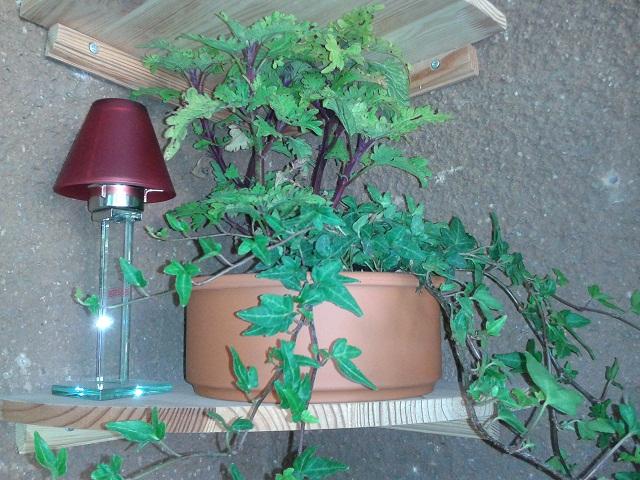 basteleien ausm pott im dunkeln l sst 39 s sich 39 s munkeln pflanzen auf schattigen balkonen. Black Bedroom Furniture Sets. Home Design Ideas