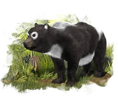 osos pandas en españa Agriarctos