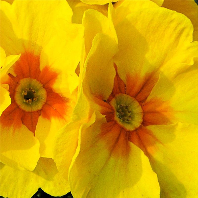 Жёлтые цветы и описание