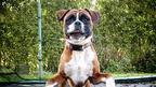 escocês é premiado por imagens de cães em ângulos inusitados