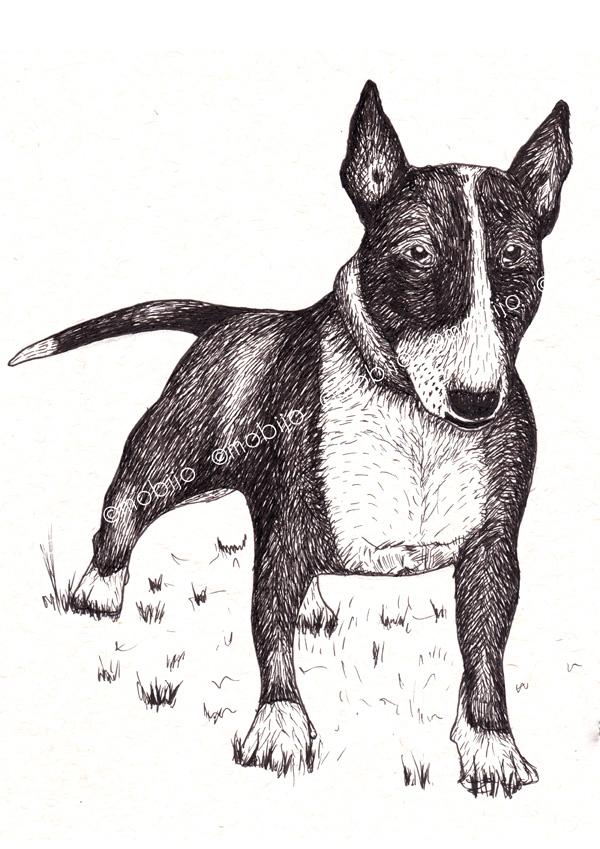 mobijo  bull terrier ink drawing