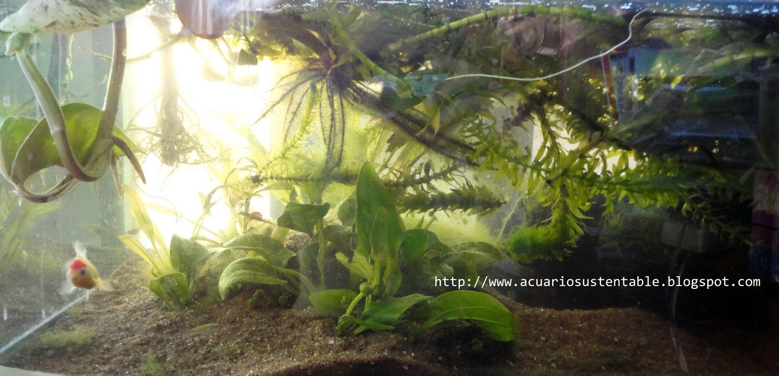 Ver tema monta tu acuario 0 watts 1 parte for Peceras en jardines