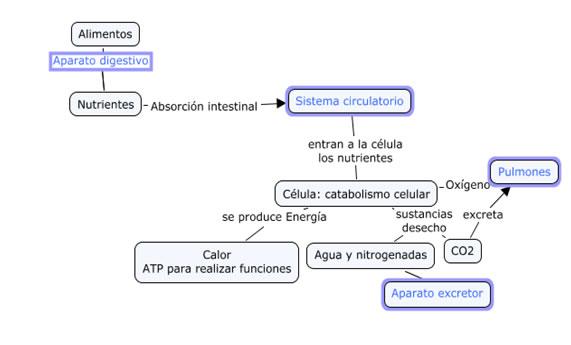 EDUCACIÓN DE ADULTOS IBIZA: LA FUNCIÓN DE NUTRICIÓN EN LOS ANIMALES