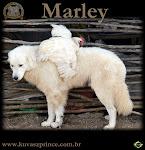 O nosso Marley!!