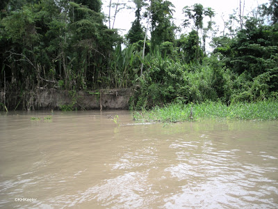 white water river, Amazon Basin