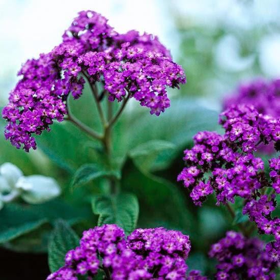 Flores e Jardins, plantas, jardinagem e paisagismo